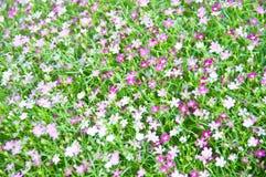 Lite violett blomma Fotografering för Bildbyråer