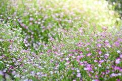 Lite violett blomma Arkivfoto
