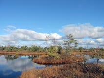 Liten ö i sjön i hed royaltyfri fotografi