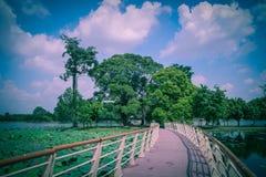 Liten ö med något träd royaltyfri foto