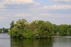 Liten ö med träd Royaltyfria Foton