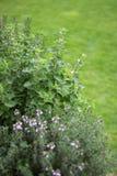 Liten örtagård Arkivbilder