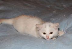 liten övre white för tät kattunge Arkivfoton