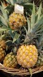 Liten ananas i korg Royaltyfria Bilder
