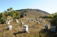 liten apiary Royaltyfri Bild