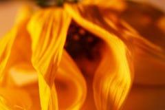Liten art för blomma Arkivfoton