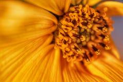 Liten artguling för växter Royaltyfria Foton