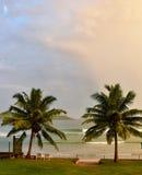 Liten avbrottsvåg mellan två palmträd Arkivbilder
