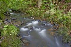 Liten bäck i skog Royaltyfri Bild