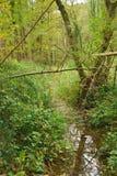 Liten bäck som flödar till och med skog Royaltyfri Fotografi