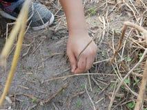 Liten babys hand som spelar och trycker på torra gräs, jord och unga spiragräs fotografering för bildbyråer