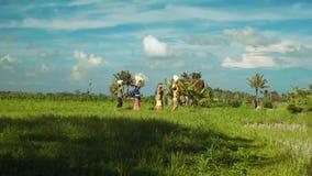 Liten balinesefamiljprocession mellan risfält lager videofilmer