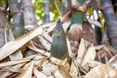 Liten bambufors Royaltyfria Foton