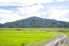 Liten bana till risfältet Arkivfoto