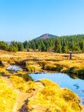 Liten bergliten vik som slingrar i mitt av ängar och solig dag för skog med blå himmel och vit, fördunklar i Jizera arkivbilder