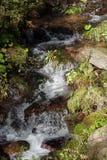 Liten bergström i skog Arkivbild