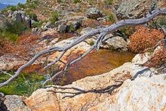 Liten bergström i Sydafrika royaltyfri foto