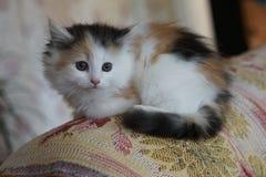 Liten bitty kattunge royaltyfri bild