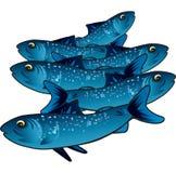 Liten blå fisk Royaltyfri Foto
