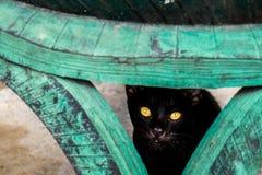 Liten blick för svartvilsekommet djurkatt på kameran Royaltyfria Bilder