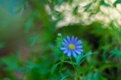 Liten blomma Royaltyfria Bilder
