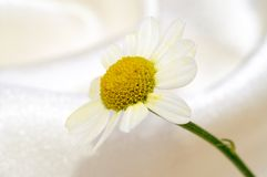 liten blomma Arkivfoton