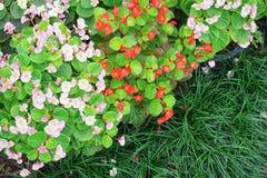 Liten blomma Royaltyfria Foton