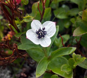 Liten blomma royaltyfri bild