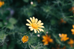 Liten blomma Arkivbild