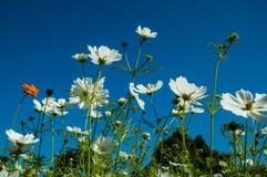 Liten blomma för bakgrund Royaltyfri Foto