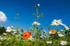 Liten blomma för bakgrund Royaltyfri Bild