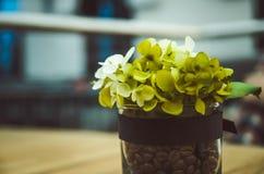Liten blomma i en kruka Arkivbilder