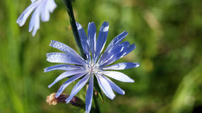 Liten blomma i makrofotografi Arkivfoto