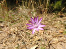 Liten blomma i makrofotografi Royaltyfria Bilder