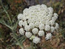 Liten blomma i makrofotografi Arkivfoton