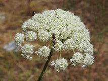 Liten blomma i makrofotografi Royaltyfria Foton