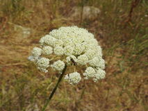 Liten blomma i makrofotografi Royaltyfri Bild