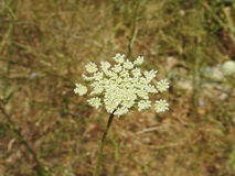 Liten blomma i makrofotografi Fotografering för Bildbyråer