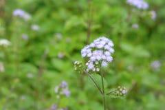 Liten blomma med bakgrund för suddighetsgräsplanträdgård Royaltyfri Bild
