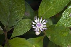 Liten-blomma som siktas i kvarleva av den atlantiska skogen Arkivbilder