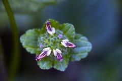 Liten-blomma som siktas i kvarleva av den atlantiska skogen Royaltyfri Bild