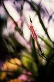 Liten blommatappning i naturställe Arkivbild