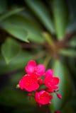 Liten blommatappning i naturställe Royaltyfri Fotografi