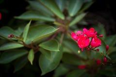Liten blommatappning i naturställe Fotografering för Bildbyråer