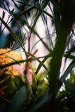 Liten blommatappning i naturställe Royaltyfria Foton