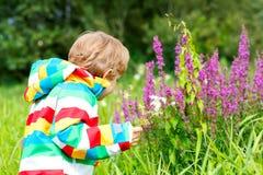 Liten blond pojke med lotten av lösa blommor på solig sommardag Enjyoing natur för lyckligt barn Unge med blommabuketten för royaltyfri fotografi