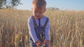 Liten bonde Årigt anseende för pojke lyckliga två på fält med mogen råg på den soliga dagen Begrepp stock video