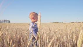Liten bonde Årigt anseende för pojke lyckliga två på fält med mogen råg på den soliga dagen långsam rörelse Begrepp lager videofilmer