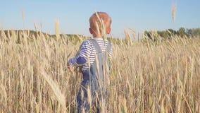 Liten bonde Lycklig ung pojke som går på fält med mogen råg på ultrarapid för solig dag Begrepp stock video