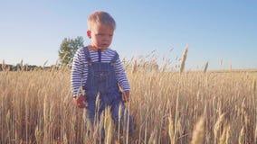 Liten bonde Lycklig ung pojkespring på fält med mogen råg på ultrarapid för solig dag Begrepp lager videofilmer